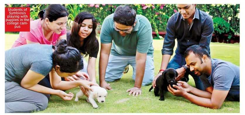 Pet Therapy - BIRR and BAHT Welcome You All to the SSMC Bengaluru Campus